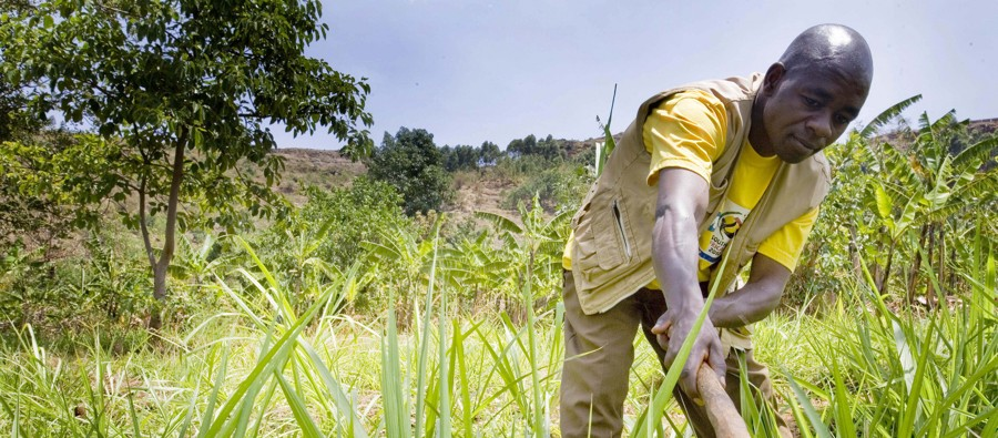 The Cost of Climate Change for Ugandan Farmers