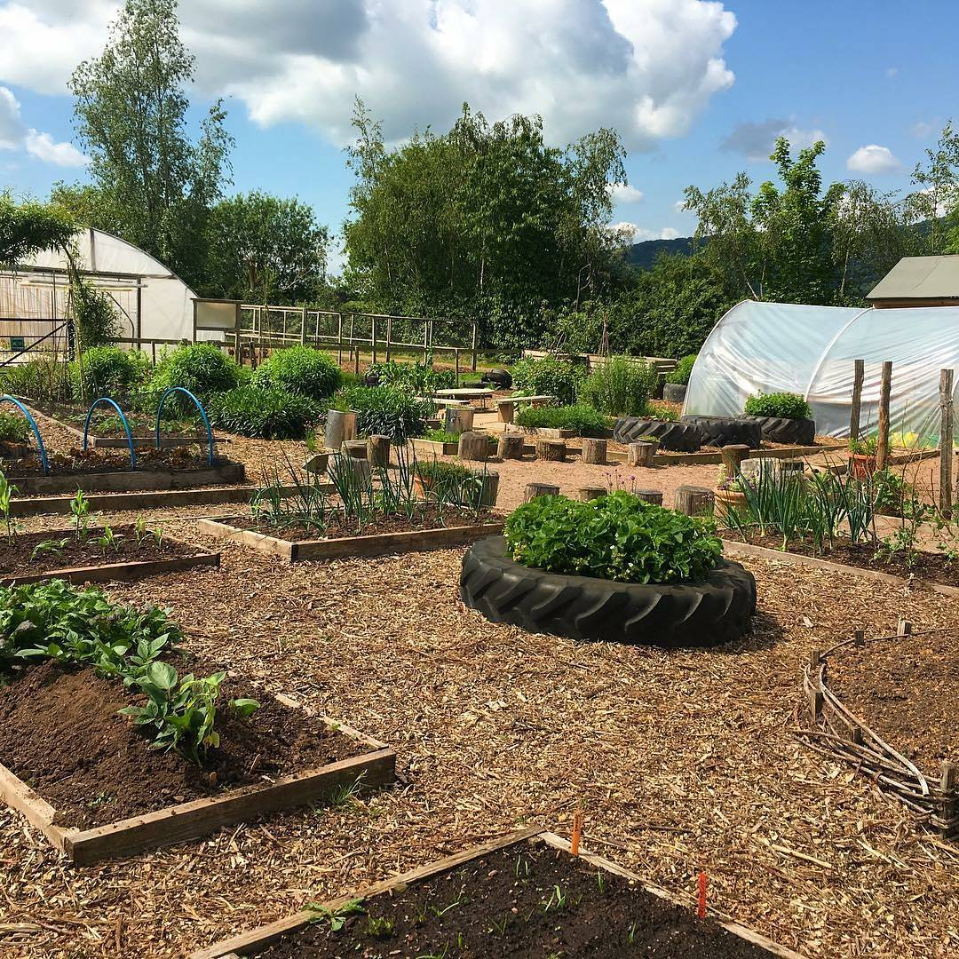From @growinglocalhq – Just look how our garden is coming along, thanks to all…