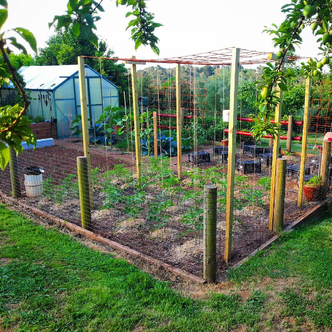We have just finished putting the String up on our Tomato Frame :) Fingers…