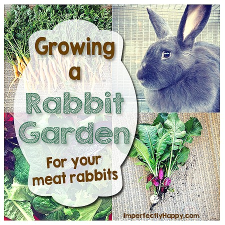 Grow Food for your Meat Rabbits