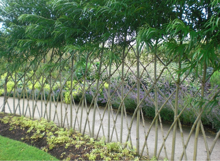 Living Fences How To Make A Living Fence For Your Garden Step By